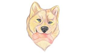 Wallpaper food, pencil drawing, dog