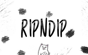 Picture white, cat, squirt, cats, white background, firm, mark, ripndip