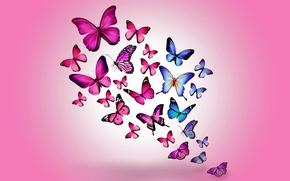 Wallpaper pink, butterfly, colorful, butterflies, design by Marika, blue