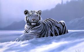 Picture tiger, art, Spencer Hodge, Siberian Tiger