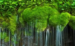 Wallpaper waterfall, moss, USA, national Park, Virginia, Shenandoah