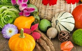 Picture autumn, flowers, basket, pumpkin, vegetables, cabbage