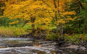 Picture autumn, trees, river, stream