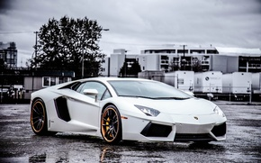 Picture white, the sky, asphalt, clouds, wet, white, wheels, lamborghini, black, front view, headlights, aventador, lp700-4, …