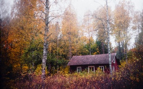 Picture autumn, forest, house