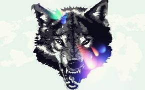 Picture animals, wolf, art