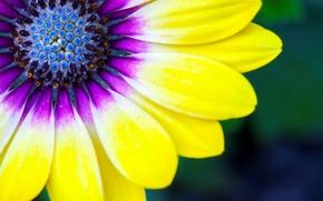 Picture flower, paint, petals