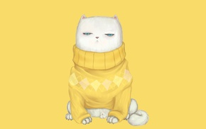 Picture cat, look, muzzle, sweater