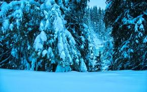 Picture Winter, Snow, White