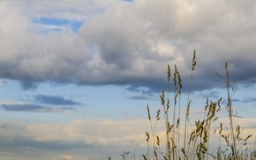 Picture the sky, clouds, Grass, Siberia