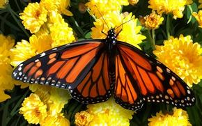 Picture flowers, butterfly, field