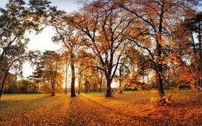 Picture autumn, leaves, the sun, trees, Park, the fence, the evening, yellow
