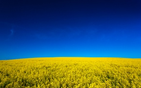 Picture field, the sky, nature, sky, nature, yellow, fields, yellow, Canola, canola