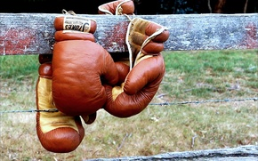 Picture sport, the fence, Boxing, Boxing gloves
