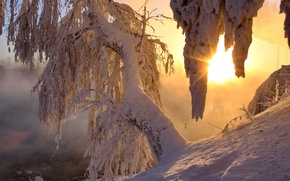 Picture winter, the sun, snow, trees, morning, rays of light