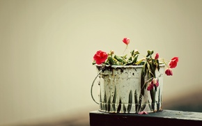 Picture grass, macro, flowers, creative, figure, plant, bucket, flowers, creative, bucket, capacity