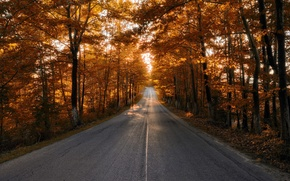 Picture road, autumn, trees