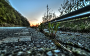 Picture road, asphalt, leaves, macro, life, plant, Rostock
