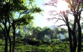Picture ART, NATURE, GRASS, The SUN, TREES, KLONTAK