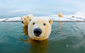 Picture sea, the sky, bear, polar bear, Arctic