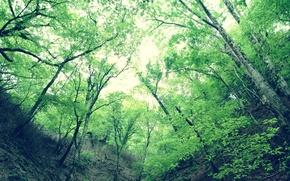 Wallpaper trees, green, Gorge, leaves