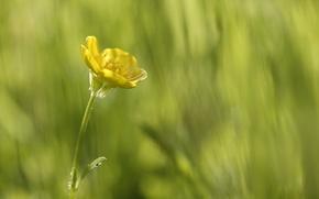 Wallpaper macro, beauty is in simplicity, greens, yellow, flower