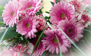 Picture pink, bouquet, gerbera