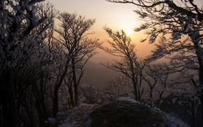 Picture trees, landscape, morning