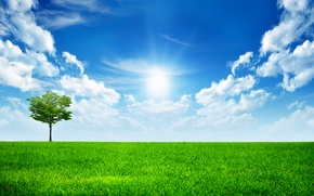 Wallpaper All Alone In This World, the sun, tree, grass, trees, green, the sky, grass, sky, ...
