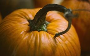 Wallpaper pumpkin, halloween, pumpkins