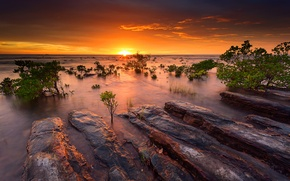 Picture sea, the sky, water, the sun, sunset, stones, the ocean, the evening, Australia, mangrove bushes