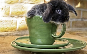 Picture rabbit, muzzle, Cup