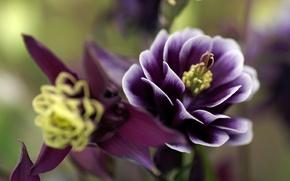 Picture flower, macro, plant, petals