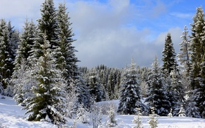 Picture winter, forest, the sky, clouds, snow, trees, ate, the snow, Ural, Rosia