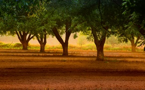 Picture widescreen, leaves, HD wallpapers, Wallpaper, leaves, tree, full screen, background, fullscreen, widescreen, background, nature, widescreen, …