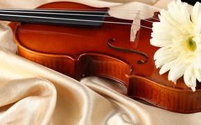 Picture flower, violin, fabric, Atlas, white gerbera