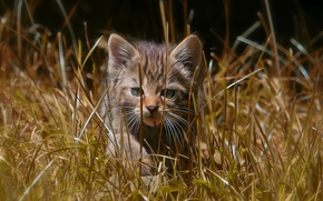 Picture grass, walk, kitty, wild cat, forest cat