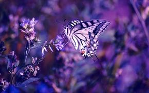 Wallpaper flowers, macro, plants, lilac, flower, purple, color, purple, insect, butterfly