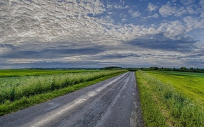 Picture road, field, the sky, landscape