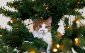 Picture cat, garland, holiday, kitty, white, red, tree, cat