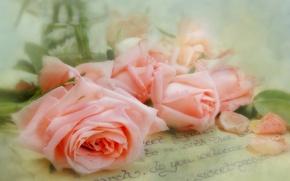 Wallpaper letter, style, tenderness, roses, petals