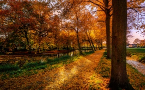 Picture autumn, leaves, trees, Park, home, yellow, track, Netherlands, alley, Dorpsdijk