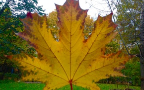 Picture Autumn, Nature, Leaf