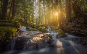 Picture forest, light, river, morning