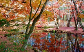 Wallpaper autumn, Park, garden, trees, pond, leaves