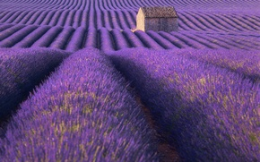 Picture field, summer, flowers, nature, house, lavender