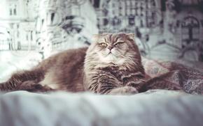 Picture cat, room, blanket