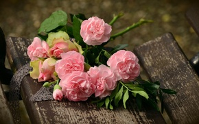 Picture pink roses, pink peonies, on the bench