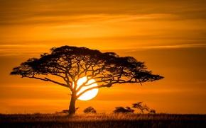 Picture the sun, sunset, tree, Savannah