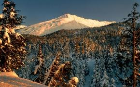 Picture winter, forest, snow, trees, landscape, mountains, Park